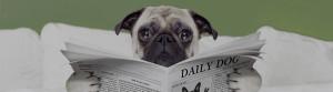 Mops liest Zeitung
