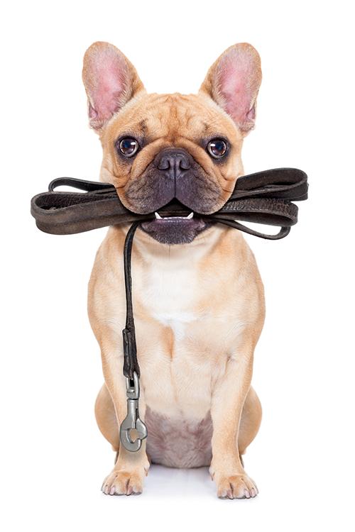 Verhaltenstherapie beim Hund