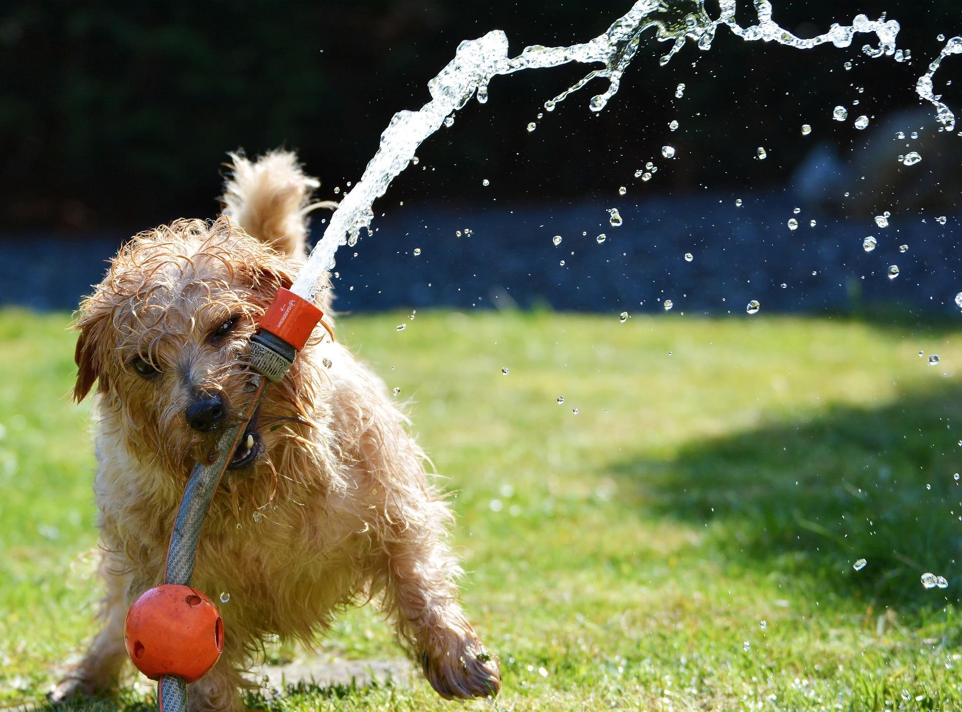 So kommt ihr Hund gut durch den Sommer – coole Tipps für heiße Tage