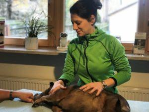 Termine Phystiotherapie Petra Vischer